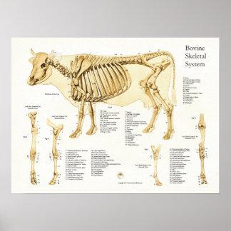 Cow Bovine Skeletal Anatomy Poster