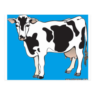 cow cartoon vectors--b postcard