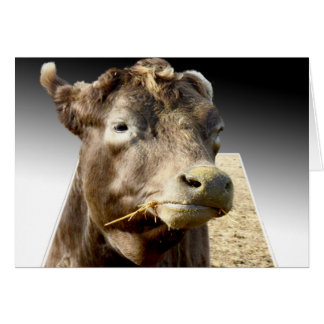 Cow Chewing Hay, Popout Art, Greeting Card
