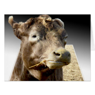 Cow Chewing Hay, Popout Art, Jumbo Greeting Card
