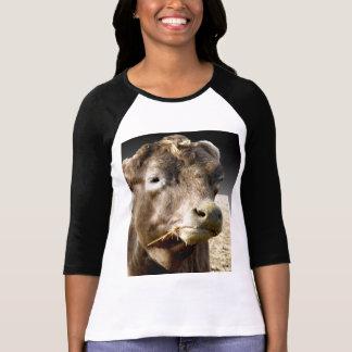 Cow Chewing Hay, Popout Art Ladies Raglan T-shirt