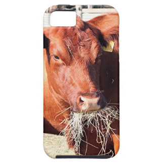 Cow eating hay on farm iPhone 5 covers