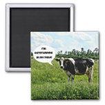 Cow Humour