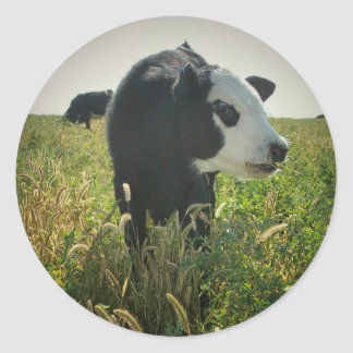 Cow in Pasture Sticker