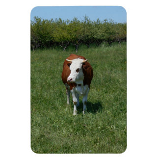 Cow In The Pasture Magnet