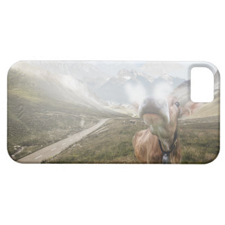 Cow in the valley - iPhone 5 case
