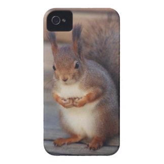 Cow-lick Squirrel Case