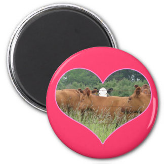 Cow Love-White Faced Cow with Herd of Red Cows 2 Inch Round Magnet