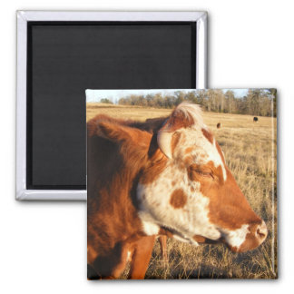 Cow magnet: Fancy Magnet