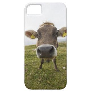 Cow near Tre Cime Di Lavaredo in Misurina, Case For The iPhone 5