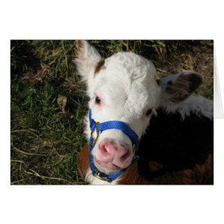 Cow Note Card