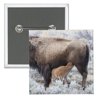 Cow Nursing Bison Calf, Yellowstone 2 2 Inch Square Button