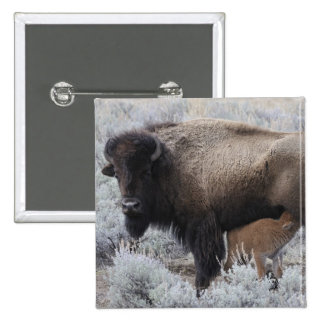 Cow Nursing Bison Calf, Yellowstone 2 Inch Square Button