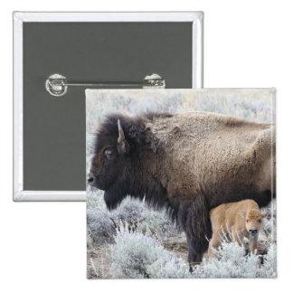 Cow Nursing Bison Calf, Yellowstone 3 2 Inch Square Button