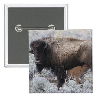 Cow Nursing Bison Calf, Yellowstone 2 Inch Square Button