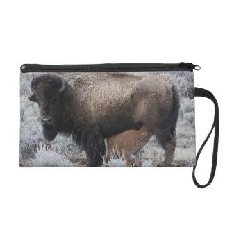 Cow Nursing Bison Calf, Yellowstone Wristlet Clutches