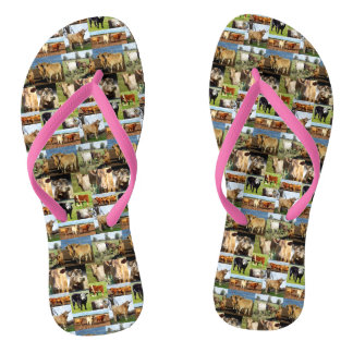 Cow Photo Collage, Flip Flops, Flip Flops