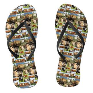 Cow Photo Collage, Flip Flops, Flip Flops