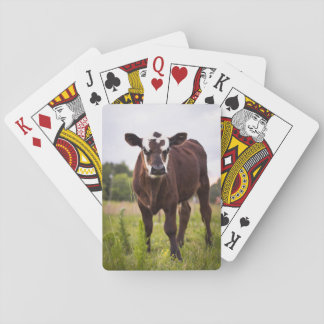Cow Playing Cards