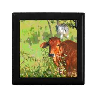 COW QUEENSLAND AUSTRALIA ART GIFT BOX
