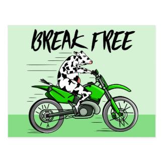 Cow riding a green motor cross bike postcard