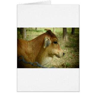 COW RURAL QUEENSLAND AUSTRALIA CARD