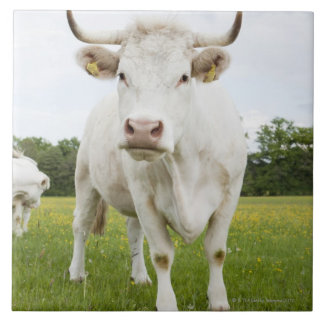 Cow standing in grassy field tiles