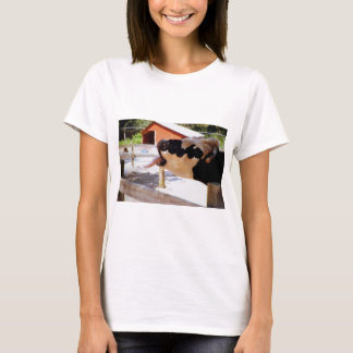 Cow sticking it's tongue out for popcorn T-Shirt