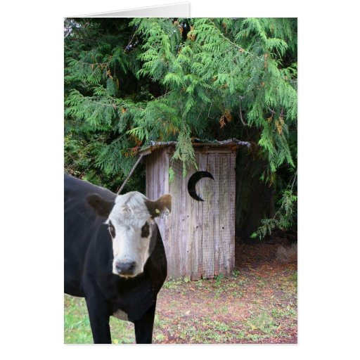 Cow Visits an Outhouse Greeting Card