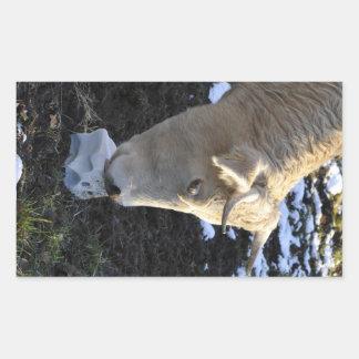Cow which licking a block salt