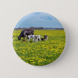 Cow with calves grazing in meadow with dandelions 2 inch round button