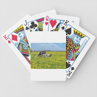 Cow with calves grazing in meadow with dandelions bicycle playing cards
