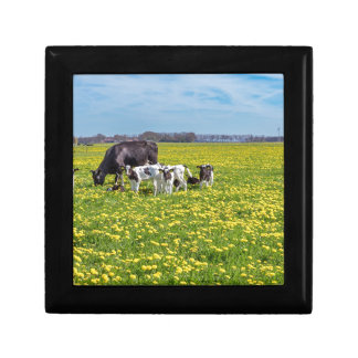 Cow with calves grazing in meadow with dandelions gift box