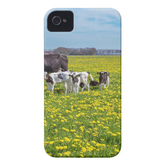 Cow with calves grazing in meadow with dandelions iPhone 4 covers