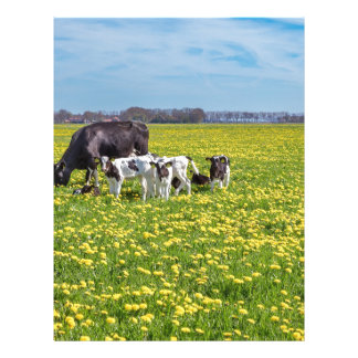Cow with calves grazing in meadow with dandelions letterhead design