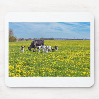 Cow with calves grazing in meadow with dandelions mouse pad