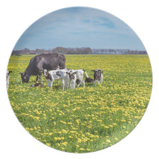 Cow with calves grazing in meadow with dandelions plate