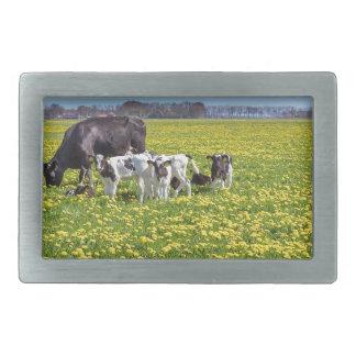 Cow with calves grazing in meadow with dandelions rectangular belt buckles