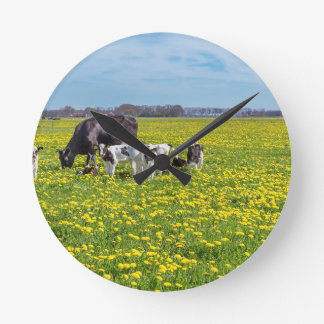 Cow with calves grazing in meadow with dandelions round clock