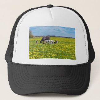 Cow with calves grazing in meadow with dandelions trucker hat