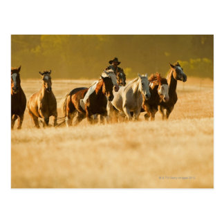 Cowboy herding horses 2 postcard