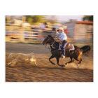 Cowboy lassoing calf postcard
