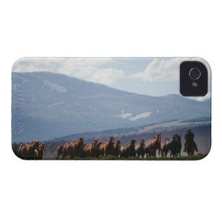 Cowboy moving herd of horses iPhone 4 Case-Mate cases