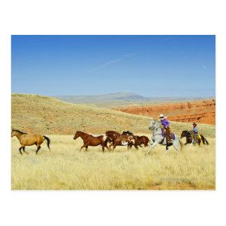Cowboys herding horses postcard