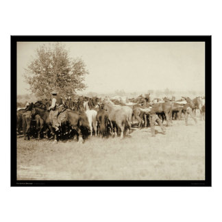 Cowboys Roping a Herd of Horses SD 1887 Poster