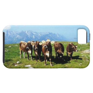 Cowing Around The Alps iphone 5/5S Case