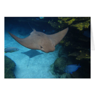 Cownose Ray Card