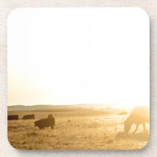 Cows at Sunrise on the Prairies Coaster
