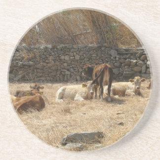 Cows Coaster
