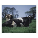 cows in a pasture print